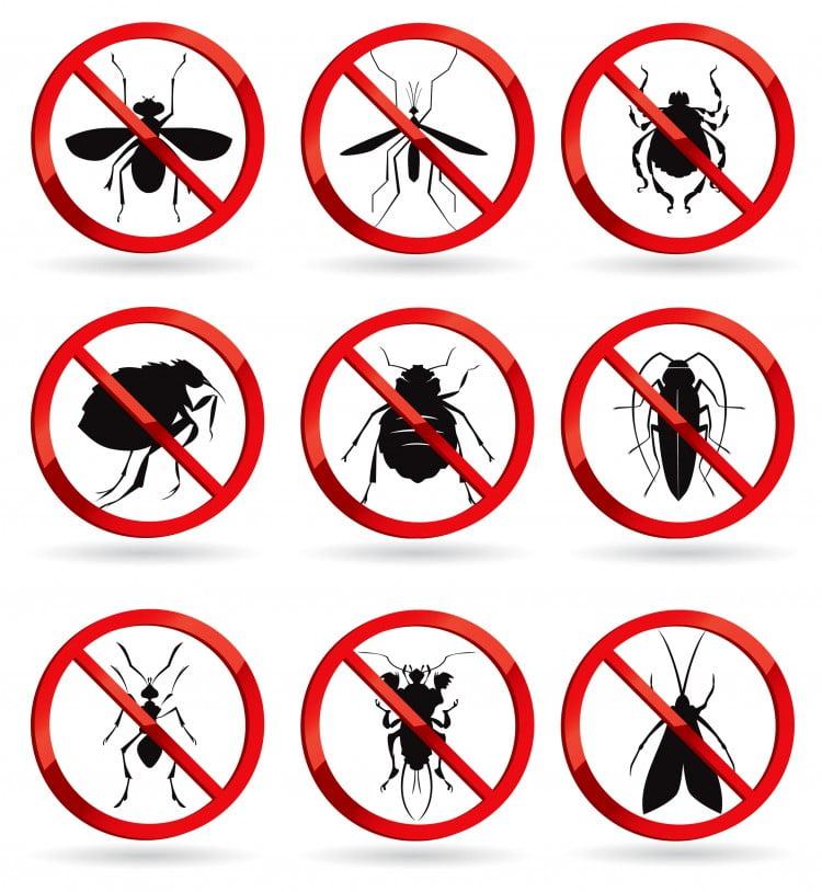 express pest control