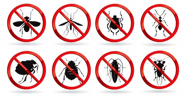 pest control group of animals