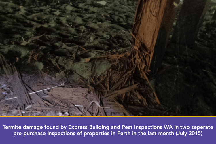 termite water damage