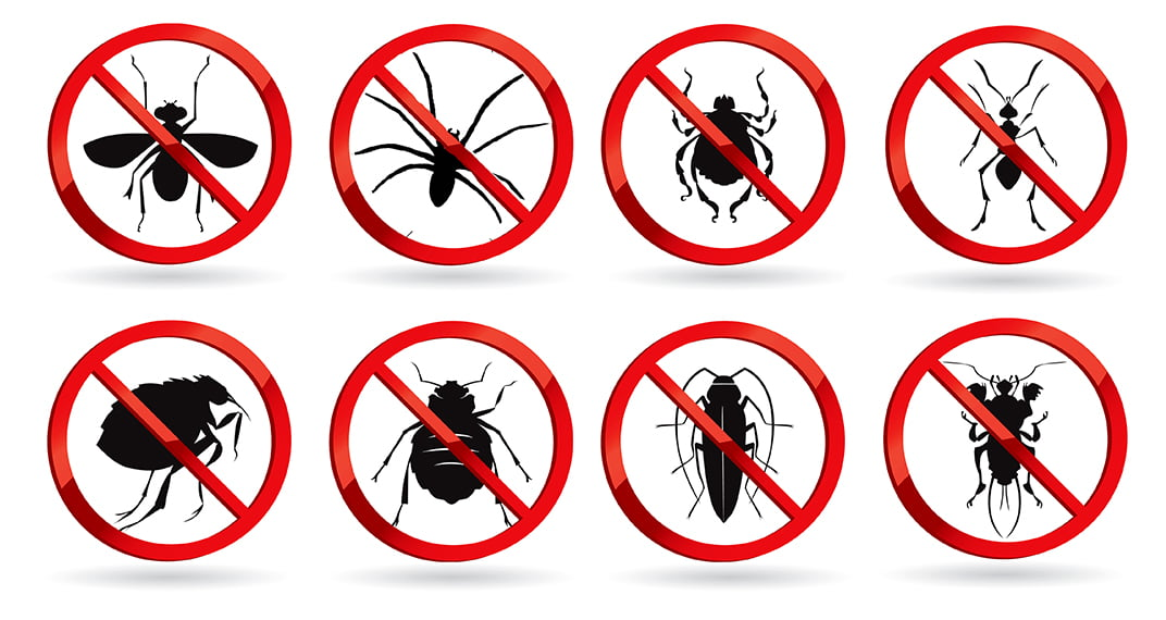 pest control types of bugs insects spiders