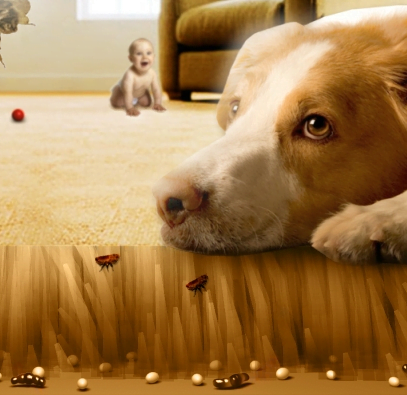 end of lease pest control with a dog on the carpet